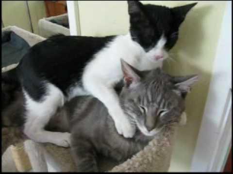 Kitten Bath - Kitten Love - Most Viewed