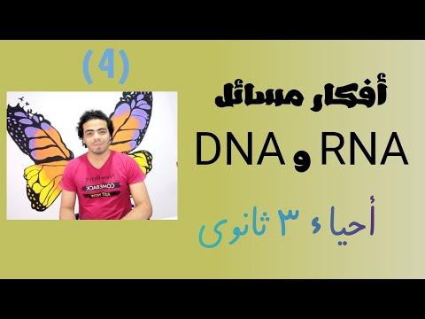 حل مسائل الـ DNA و RNA   الفيديو (4)