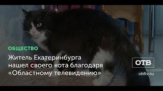 Житель Екатеринбурга нашел своего кота благодаря «Областному телевидению»