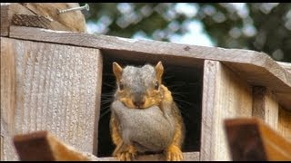 CUTE! Momma squirrel moves her babies