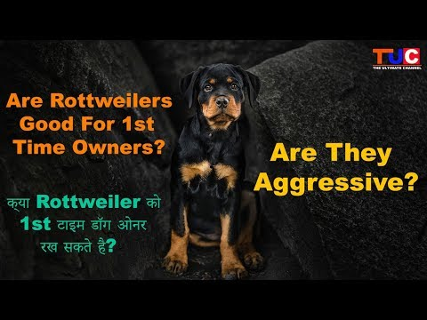 Are Rottweilers Good For 1st Time Owner? Are #Rottweilers Aggressive? TUC