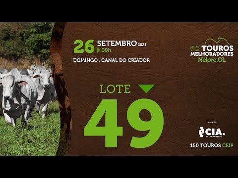 LOTE 49 - LEILÃO VIRTUAL DE TOUROS 2021 NELORE OL - CEIP