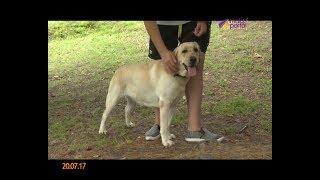 В Сочи участились случаи нападения собак на людей