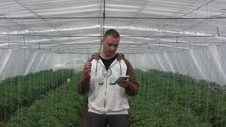 Очень подробно))) Количество удобрений в тонне поливной воды. Томат с первой по 3ю кисть цветения.