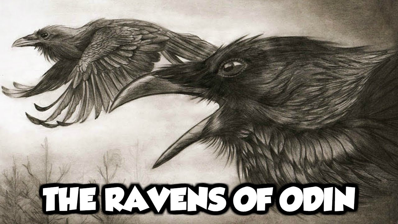 Odin S Mythical Ravens Huginn And Muninn Norse Mythology Explained