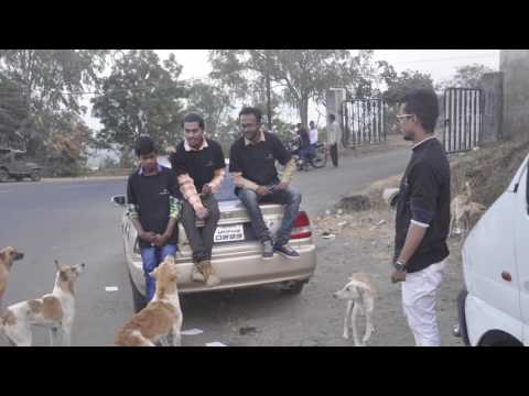 Cooking for Indian dogs breed! Feeding stray dogs.