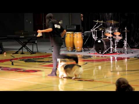 Performing at the Talent Show ~(dog performance)~