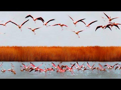 Аггёльский национальный парк. Птичий рай. Ag-gol national park. Bird paradise. [Eng.Sub.]