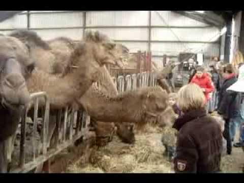 Kamelenmelkerij Frank Smits, Camel Farm Frank Smits