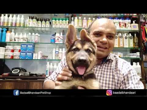 how-to-control-puppy-play-biting-?-by-baadal-bhandaari-pathankot-9878474748