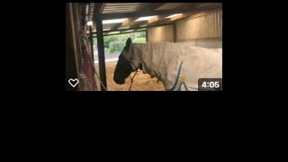 30 Day Horse Vlog Day 20 - Short and Sweet Again But We're Baaack!!