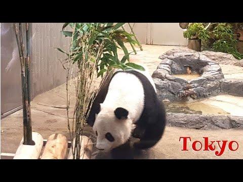 Vimos um Panda em Tokyo | Canal Mundo ao Vivo | Japão - Vlog 17