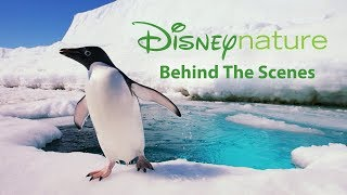 Disneynature's Penguins: Behind The Scenes In Icy Antarctic (2019) Family Nature Movie