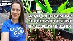 DIY Aquarium Aquaponic Planter - How to build