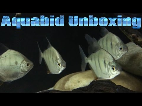 Aquabid Tiger Silver Dollars Unboxing + Footage