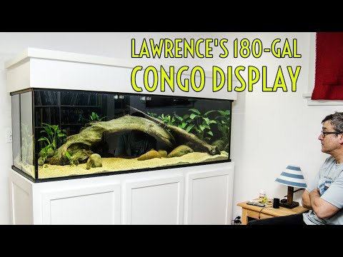 Lawrence's 180-gallon Custom Aquariums Display