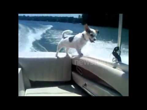 Dog falls off boat