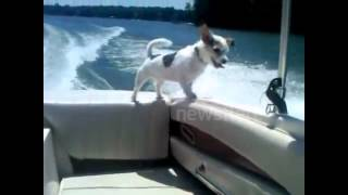 Dog falls off boat