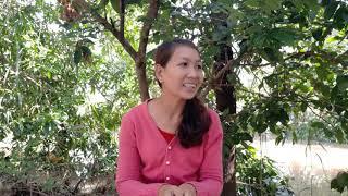 Mẹo trồng dừa sáp cho tỷ lệ cao