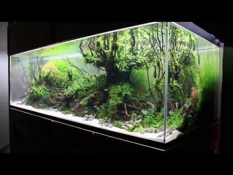 The International Aquatic Plants Layout Contest 2013 No.36 「LAPUTA: Castle in the Sky Ⅲ」