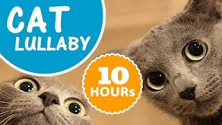 10 HOURS cat lullaby ❤ BEST cat music 2018 ♫ for your cat's sleep
