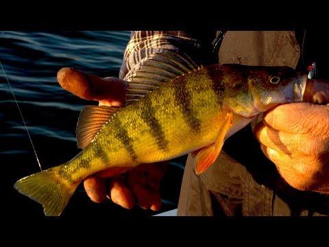 Fall Perch Fishing (Big Stone Lake)