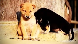 Animals Falling Asleep 😂 Funny Animals Trying to Stay Awake Compilation (HD) [Funny Pets]