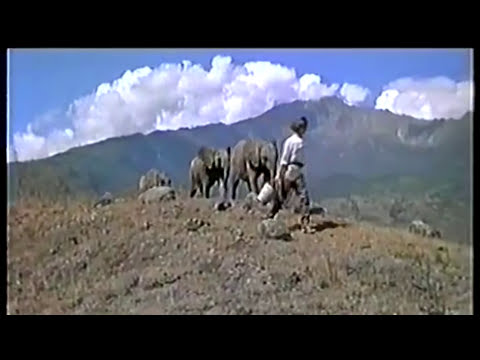 The Baby Elephant Walk from
