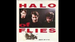 "Halo Of Flies  ""Death Of A Fly"" • Amphetamine Reptile Records"