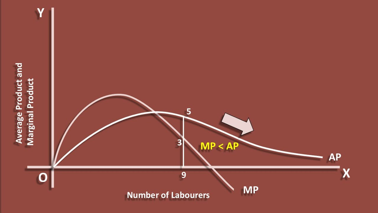 explain the relationship between marginal product and average product The production function and the law of marginal product curves and marginal product can be computed explain the relationship between total product average.