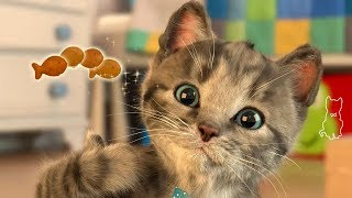 Маленький котенок (Little Kitten) - продвинутый тамагочи (iOS)