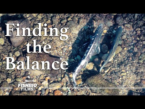 Finding The Balance: A Study On Pulse Flows