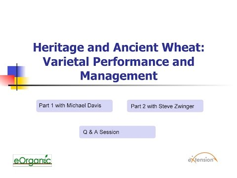 Heritage and Ancient Wheat: Varietal Performance and Management