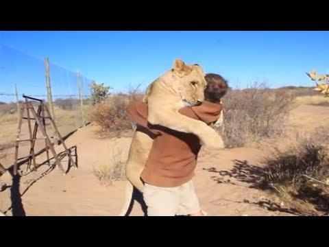 5 Reencuentros De Animales Con Sus Cuidadores