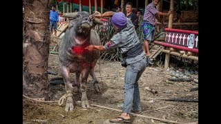 Top 12 Animal Killing By People For They Culture