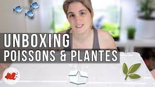 [Unboxing] Poissons & Plantes boutique AquaChange