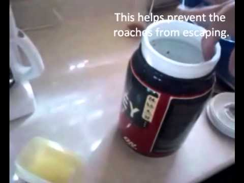 Make Your Own Roach Trap - YouTube