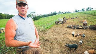 pasture-perfect-pigs-at-scale-400