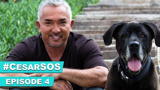 'Help Cesar My Dog Won't Eat!'