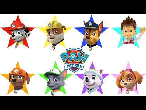 Best PAW PATROL Educational Learning Videos for Children Compilation | Fizzy Fun Toys