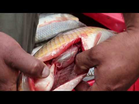 HOW TO PURCHASE A FRESH FISH #freshfillets#interiorgills#