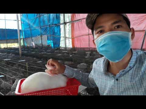 Giá Thỏ thịt có thể đạt 100 ngàn 1 kg trong 2020