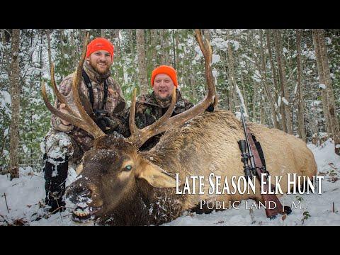 Elk Hunt Late Season 2017 | MI
