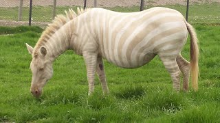 Rare and Unusual Animal Colors and Markings