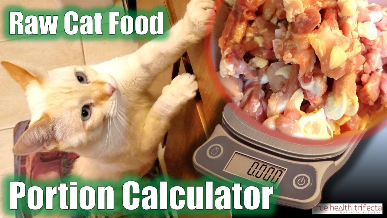How much raw cat food do i feed my cat portion calculator tutorial how much raw cat food do i feed my cat portion calculator tutorial cat lady fitness forumfinder Choice Image