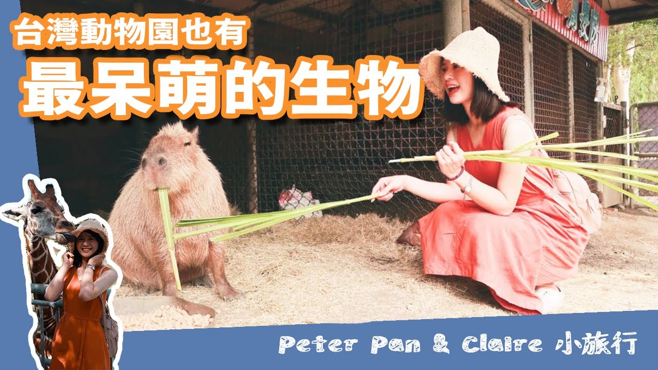 端午節立鴕鳥竟然獲得大獎!? 台灣上野動物園 | 最呆萌的生物 | 頑皮世界 | 台南vlog