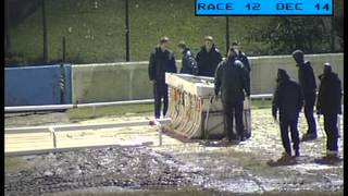 Whippet Racing at Sittingbourne Dogs