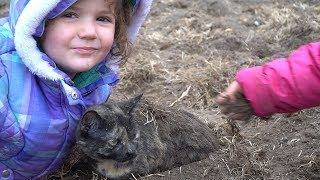 They buried our cat! - Preparing the raised beds - vlog 011