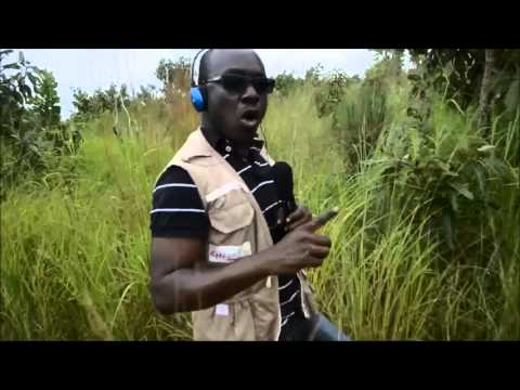 Phone Farming: How SMS is changing agriculture in Ghana