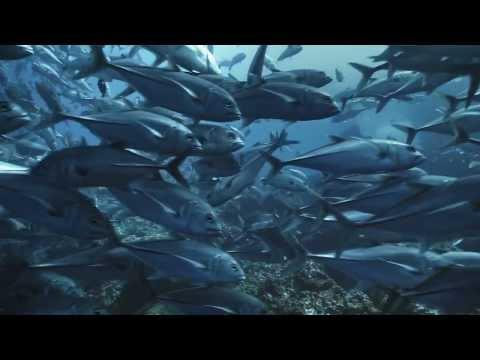 География материков и океанов. 7 класс. Коринская